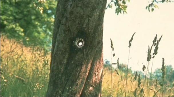 Tree_that_billy_shot3