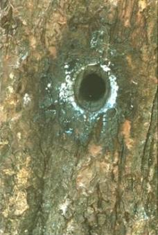 Tree_that_billy_shot4