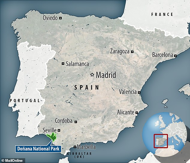 6235678-6393371-The_location_is_somewhere_north_of_the_city_of_Cadiz_Andaluc_a_c-a-2_1542303929640