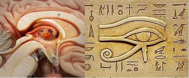 pineal_gland_eye_of_horus