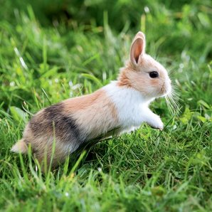 aliments-Lapin