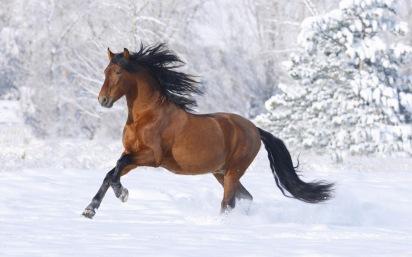 fonds-decran-cheval-2