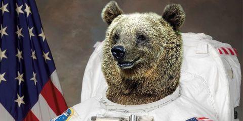 landscape-1427838102-bear-astronaut-112207