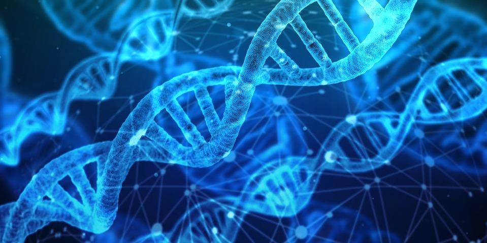 ADN-Adrien-Locatelli-injection-gene-synthetique-proteine-adenovirus