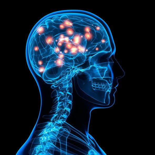 brain-2063574