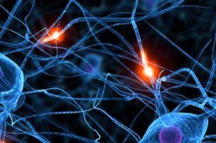 neuronas1
